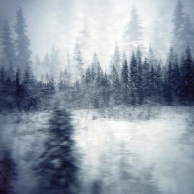 Landscapes: Finland, 2006